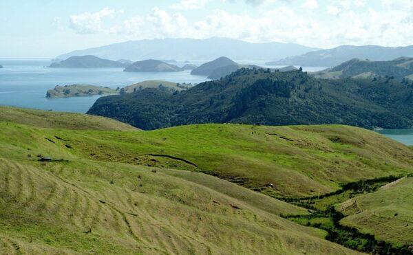 Coromandel Peninsula - Gold panning in New Zealand